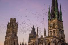Birds (-Baptiste Coub-) Tags: sky bird noiretblanc cathdrale ciel rouen oiseaux seinemaritime exterrieur d3100 18105mn baptistecoubronne