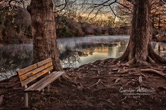 San Marcos River Island Bench