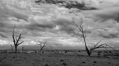 the stories that they told (keith midson) Tags: trees cloud clouds landscape dry nile drought tasmania barren deadtrees