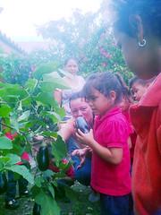 IMG-20160505-05723 (dernst) Tags: jardin huevos cosecha gallinas preescolar
