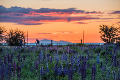 Garry Point Park Sunset (Geoff Blondahl) Tags: sunset water nikon britishcolumbia richmond 500 steveston garrypointpark maylongweekend project365 d810