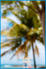 bokeh beach.... (Baja Juan) Tags: ocean trees sea vacation blur beach haiti blurry artistic bokeh royal cruising palm outoffocus tropical caribbean baja labadee bokehd bokehing