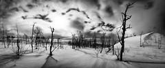 Saltfjellet (strupert) Tags: trees winter blackandwhite bw panorama snow norway mono norge nikon pano norland saltfjellet d810 1424mm