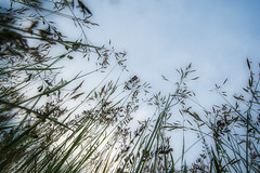 Graswald (Rainer Schund) Tags: nature forest nikon natur jungle makro wald 18mm urwald weitwinkel klien uww vollformat nikond700 naturemasterclass natureexploring graswald