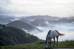 Morning with a mist. (E S M Photography) Tags: morning horse naturaleza mist mountains nature grass clouds caballo countryside natural outdoor country ngc niebla sonyflickrawardgold