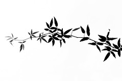 Untitled (Yuta Ohashi LTX) Tags: bw white black monochrome leaves silhouette composition 35mm leaf nikon fixed f18  focal     d90 primelens