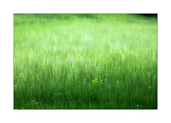 pradera (Ramn Medina) Tags: painterly abstract verde green grass verano prairie abstracto impressionist icm pradera hierba tonos impresionista intentionalcameramovement