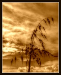 Nice day everybody (patrick.verstappen) Tags: grass texture textured twitter evening photo picassa pinterest pat ipernity ipiccy imagine inspiration inspirational nikon d7100 flickr facebook gingelom google