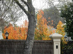 A Blast of Late Autumn (mikecogh) Tags: collegepark garden contrast autumn leaves golden brushfence pillar lamp