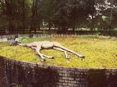 Berenkuil  Maastricht. (Romain Petit) Tags: berenkuil zoo girafe art maastricht