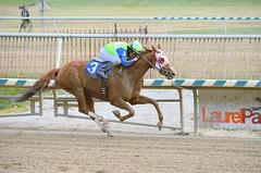"2015-01-02 (105) r6 Sheldon Russell on #3 Lasamanamama (JLeeFleenor) Tags: photos photography md marylandracing marylandhorseracing laurelpark jockey جُوكِي ""赛马骑师"" jinete ""競馬騎手"" dżokej jocheu คนขี่ม้าแข่ง jóquei žokej kilparatsastaja rennreiter fantino ""경마 기수"" жокей jokey người horses thoroughbreds equine equestrian cheval cavalo cavallo cavall caballo pferd paard perd hevonen hest hestur cal kon konj beygir capall ceffyl cuddy yarraman faras alogo soos kuda uma pfeerd koin حصان кон 马 häst άλογο סוס घोड़ा 馬 koń лошадь sheldon sheldonrussell chestnut maryland"