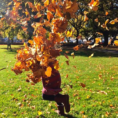 113/365 • #M doused Zoe in Autumn • #113_2015 #tasmania2015 #mybirthdayjourney #7yo #autumn2015 #hobart #parklife