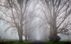 On the way (**James Lee**) Tags: road morning trees nature misty fog rural way walking landscape dawn town country perspective foggy tranquility australia walker outback bega jameslee