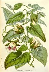 Anglų lietuvių žodynas. Žodis campanulaceae reiškia <li>campanulaceae</li> lietuviškai.