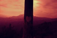 LA Does Not Love You (thedarkerdark) Tags: california sunset nature losangeles hollywoodsign palmtreegraffiti moodygrams