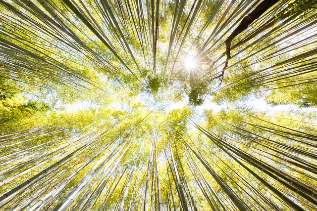 Arashiyama Bamboo Forest in Kyoto