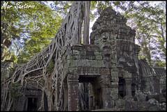Ta Prohm (Mar Santorio) Tags: d50 temple nikon cambodia siemreap taprohm templo camboya