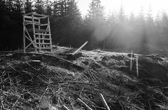 Watchtower in the forest (Brian Dalgaard Mikkelsen) Tags: blackandwhite bw nature forest denmark dawn blackwhite watchtower nationalparkthy