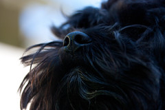 Nose (annkristin_k) Tags: dog nose hund makro nase