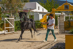 Andalusia (Pieter Mooij) Tags: horse andalusia pferd blackbeauty blackhorse paard