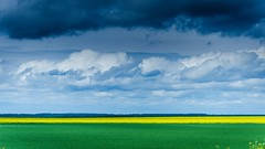 Green, yellow and blue (deVetal) Tags: sky field clouds ukraine