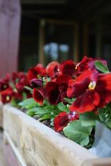 Blomparad (hildur_76) Tags: natur blommor