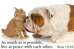 fbLivePeaceably (richard.killey) Tags: old friends two portrait dog white reflection cute english animal cat puppy nose kitten whispering looking friendship emotion expression small watching young adorable canine bulldog relationship trust pup afraid scared weeks staring emotions eight isolated alert touching pedigree