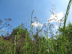 ckuchem-1224 (christine_kuchem) Tags: himmel gras garten perspektive grashalm
