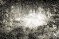 Light and Leaf (gerainte1) Tags: trees blackandwhite woodland