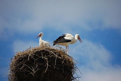2 Storks