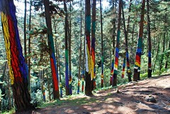 BOSQUE DE OMA (30) (cle68) Tags: bolunzulu kortezubi oma basondo santimamie bosque paisaje senderismo euskadi bizkaia urdaibai pinturas