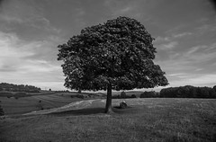 The Lonely Tree (stephmensing) Tags: bw black white amazing pretty national trust england bath uk porttait landscape nature dyrham park dead bird building architecture deer tree lonely beautiful