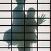 Silhouette by Jamie Kitson