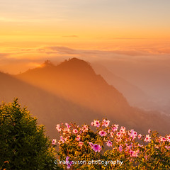 Mountain of Light (Ram Suson Photography) Tags: flowers mountains colors indonesia lights volcano java nikon view caldera valley rays bromo semeru brahma rayoflight cemoro mountbromo sidelight seaofsand mtbromo mountsemeru eastjava lawang penanjakan javanes cemorolawang bromotenggersemerunationalpark d7000 mountpenanjakan bromonationalpark nikond7000 sunriseatmountbromo