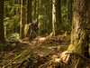 Here comes Mrs Smiley! (kendyck1) Tags: bc northshore mtb northvancouver expresso mountainbiking fromme