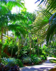 ~Oct 2009 Fairchild Gardens #3~ (endemanf) Tags: miamiflorida fairchildbotanicalgardens tropicallandscapes tropicaljunglegardens