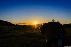 My dog is watching the sunset (DO5DKL) Tags: old dog lake tree green nature sunrise fence germany sonnenuntergang sony gras zaun birke sonyalpha mirrorless hohenahr nex3 dslm normanrupp