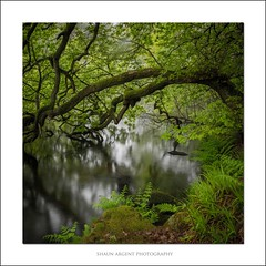 Arch (shaun.argent) Tags: trees lake tree texture nature water woodland reflections spring woods flora seasons shaunargent