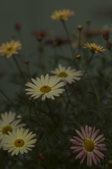 Flowers - May 2016 (GOR44Photographic@Gmail.com) Tags: pink flowers flower macro green yellow canon petals 100mm 100mmf28 canon100mm 60d gor44