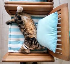 getting a nap after an intensive all night long sleep (DimitriosPi) Tags: pet animal cat relax feline nap sleep purr