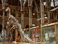 Wondrous Contrast (mikecogh) Tags: architecture contrast skeleton dinosaur display gothic columns oxford cabinets context pittriversmuseum wondrous