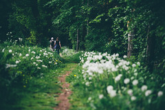 Der Pusteblumenpfad (sfp - sebastian fischer photography) Tags: nature path natur dandelion landschaft wanderer pfad odenwald lwenzahn pusteblume blowball beerfelden labdscape