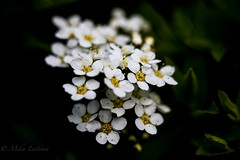 Flower power (Mika Laitinen) Tags: finland fi helsingfors uusimaa