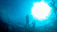 Sombras (Angela MGM) Tags: ocean naturaleza nature azul mar agua peces republicadominicana oceano arrecife 2016 cayoarena juegolvm