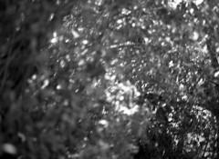 (Chlo Walker) Tags: people blackandwhite mamiya film cornwall seals ilford mamiya645 120mm