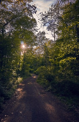 Road to nowhere (tdalpert) Tags: road trees wild summer sun green leaves forest lost spring none nowhere dirt jungle overgrowth