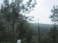Munnar 104.JPG (invisibleindian2001) Tags: munnar