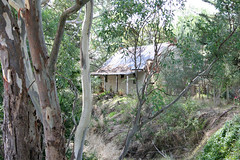 Aussie Bush Hideaway (aussiegypsy_Katherine, NT) Tags: old house building home overgrown rural landscape outdoors countryside bush scenery quiet farm small country farming cottage australian lifestyle scene structure days hills hidden hut adelaide remote times sa aussie hiding timeout past southaustralia pioneer regional isolated basic corrugatediron olden undergrowth gumtrees pioneering stepbackintime bygoneera earlysettlers lorraineharris