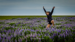 Frolicking in the Lupins (mikesa10) Tags: is iceland south lupins skogar canon6d iceland2016