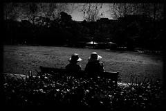 sunflowers (Albion Harrison-Naish) Tags: redfern sydney newsouthwales australia streetphotography sydneystreetphotography albionharrisonnaish mobilephotography iphoneography iphone iphonese hipstamatic akiralens blackeyssupergrainfilm jollyrainbow2xflash unedited sooc straightoutofcamera